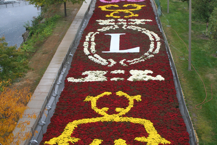 Fall Flower Carpets